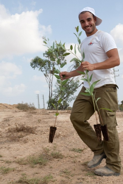 צמח צמחיה שיח שתיל קקל החלה בשיקום נופי באזור הדרום 4