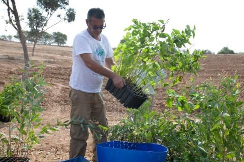 שתיל  צמח צמחיה שיח קקל החלה בשיקום נופי באזור הדרום 5